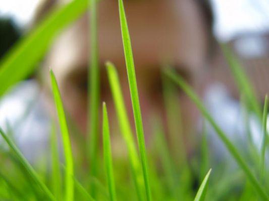 Frühling....Verstecke dich nicht!