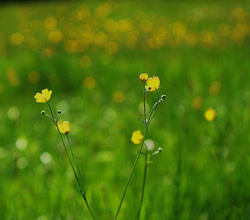 Frühlinsbilder 2.
