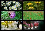 Frühlinsblumenfenster