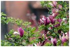 Frühlinsboten