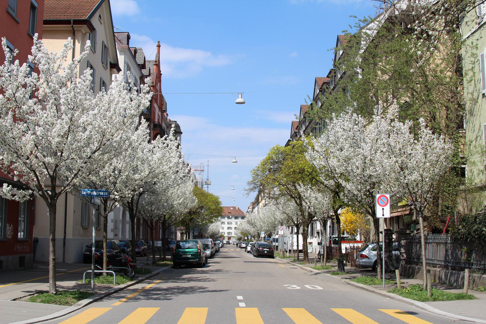 Frühlinsgrüsse aus Zürich
