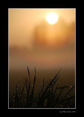 Frühmorgens auf der Wiese