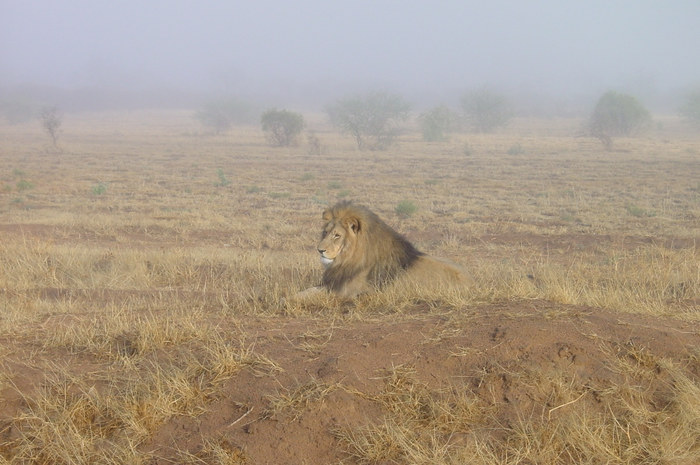 Frühmorgens in Namibia