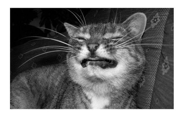 Frühmorgens, wenn ihre Zähne noch im Glas liegen, ....