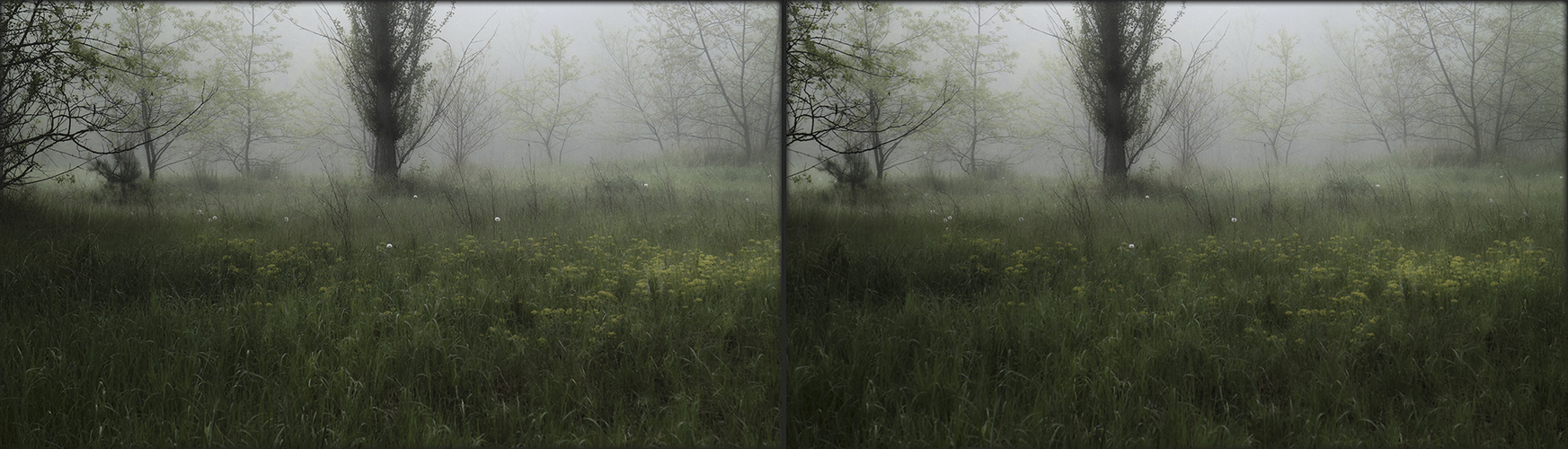 Frühnebel (3D)