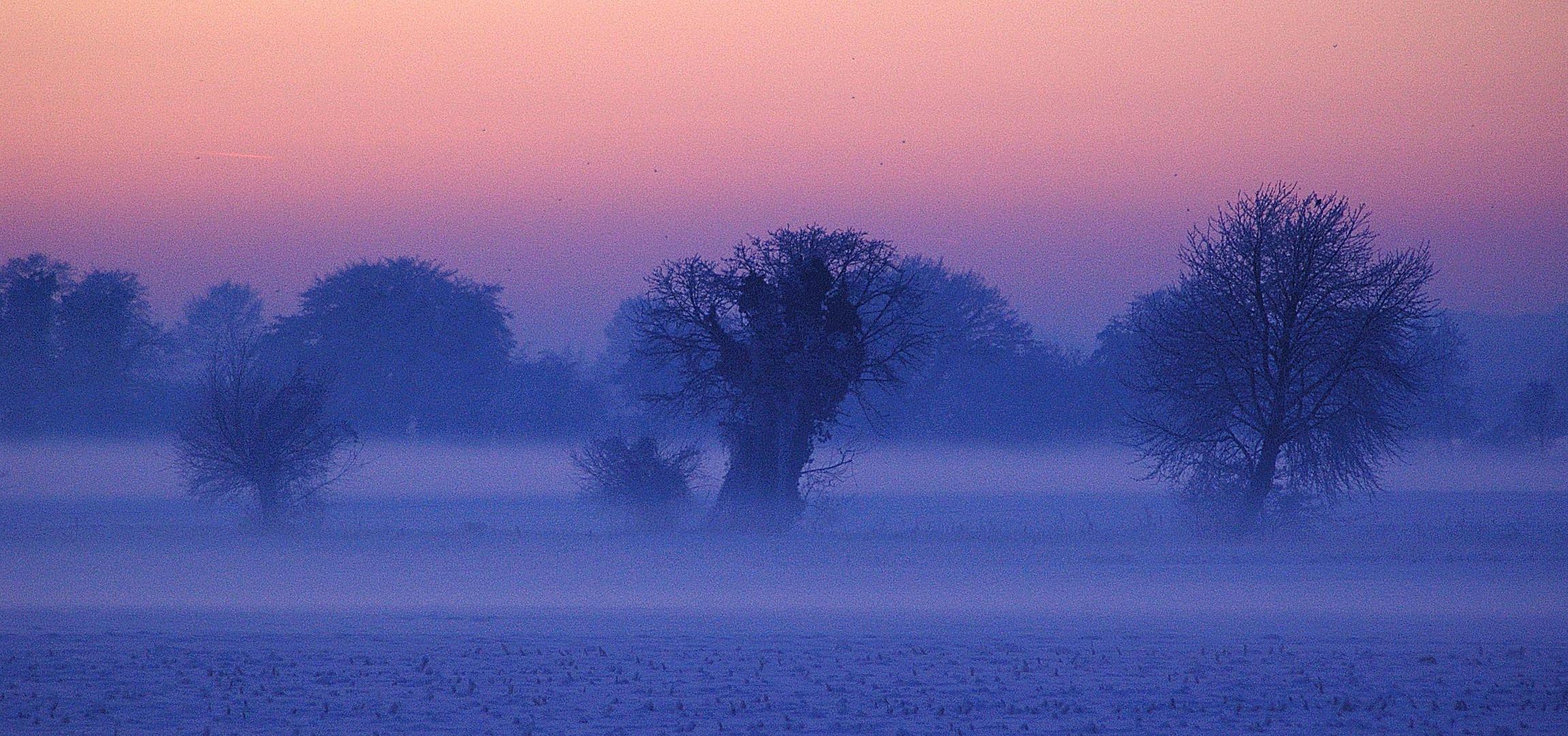 Frühnebel-Bäume 3
