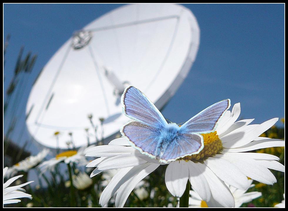Frühsommer im Antennenpark