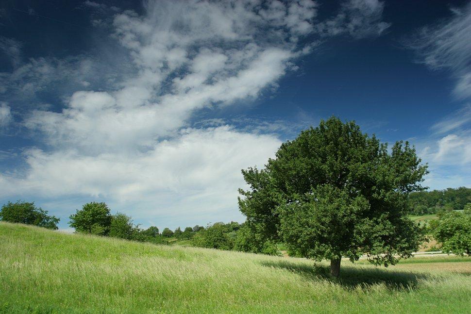 Frühsommerliche Landschaft