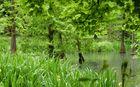 Frühsommerregen in Grün