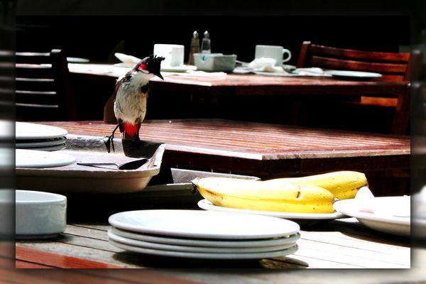 Frühstück mit Freunden 2