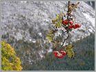 Frühwinter im Riesengebirge