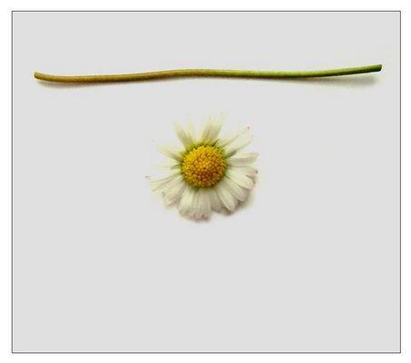 früjahrsblümchenbauteilsatz