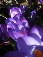 Früühling *_*
