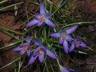 Früüühling