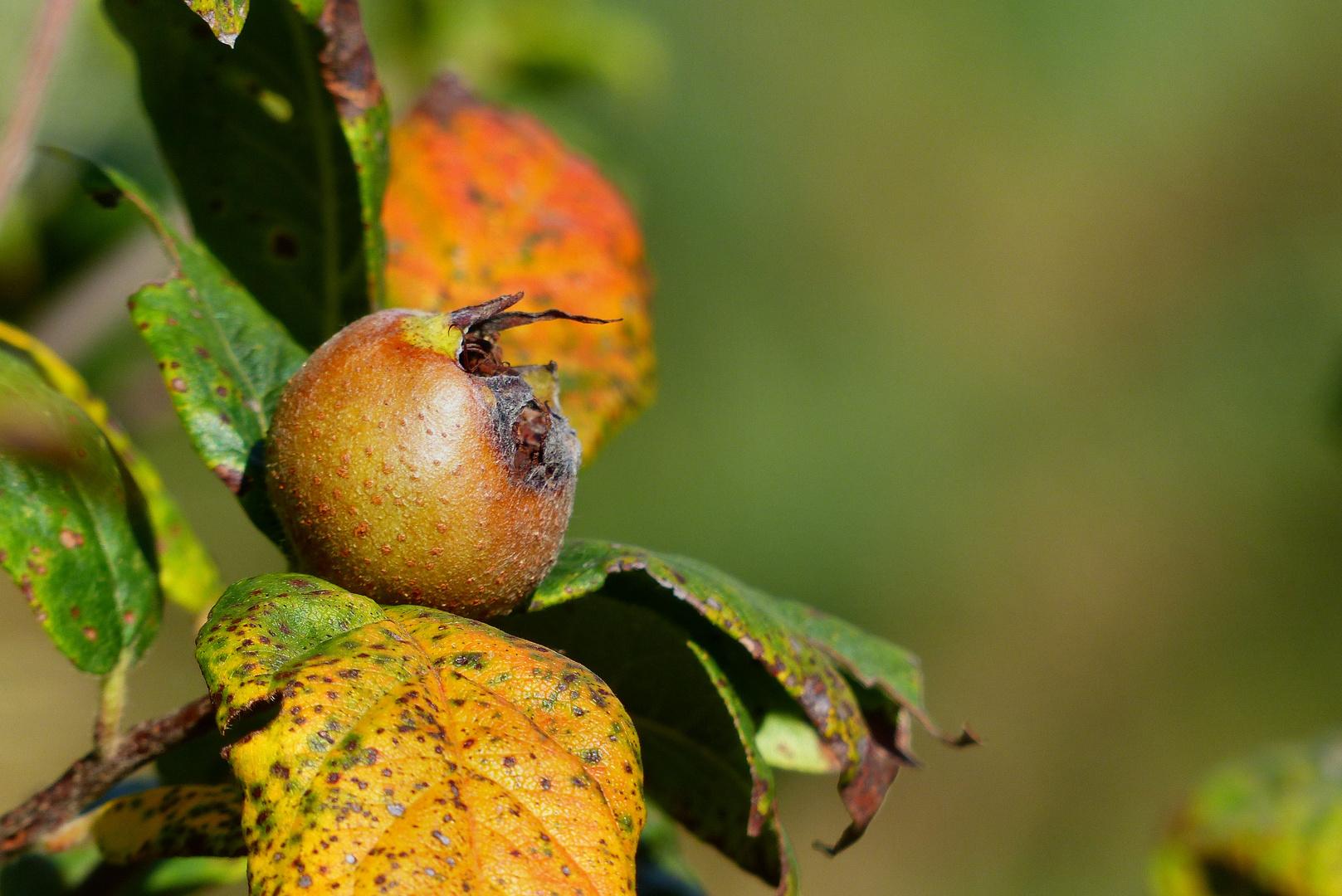Fruit d´automne