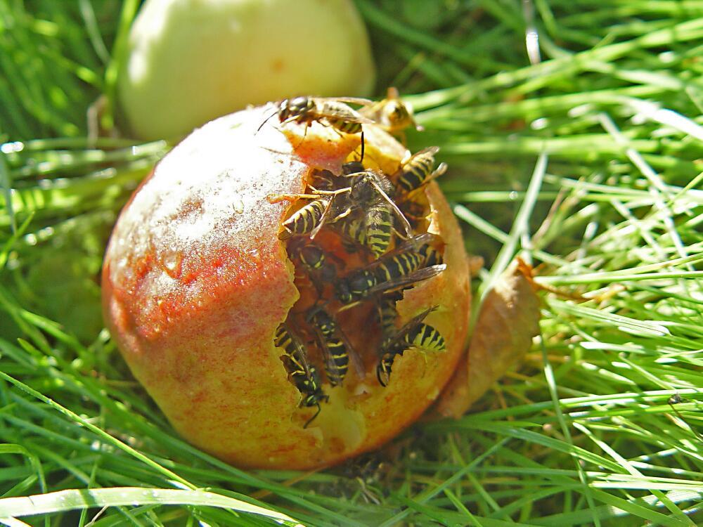 Fruitful orgy