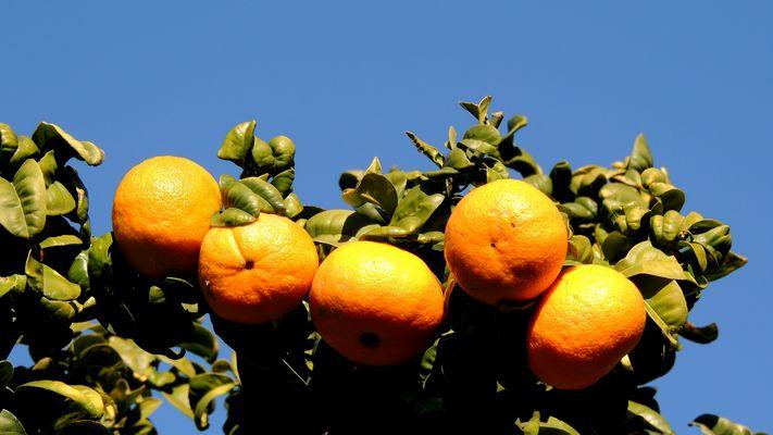 Fruits de saison à Menton