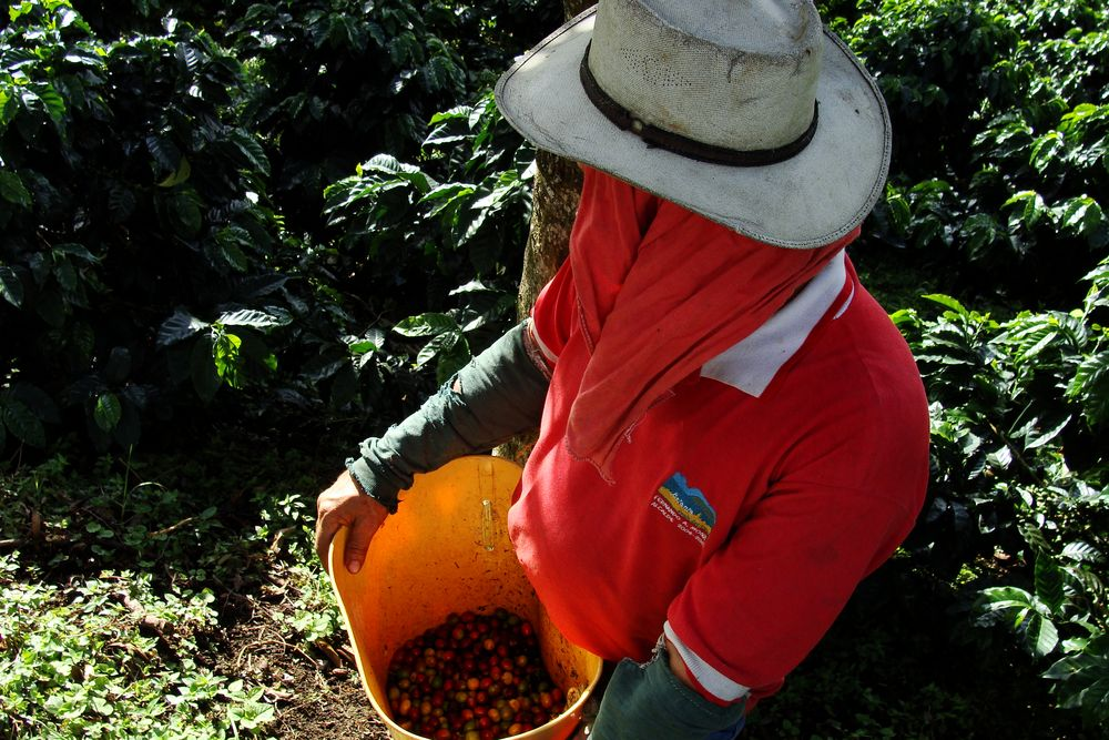 Frutos cosechados von Juangiga