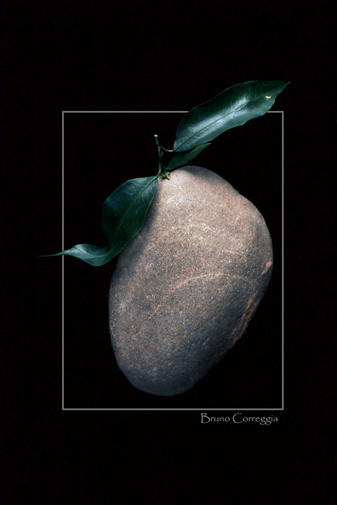 Frutto di Pietra