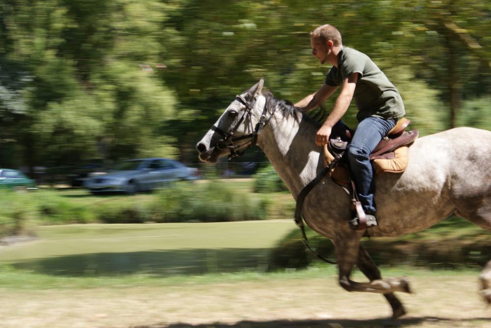 fête du cheval et de l'âne à Sainte Christine