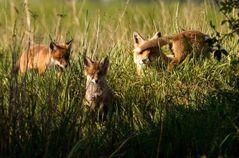 Fuchs Familie