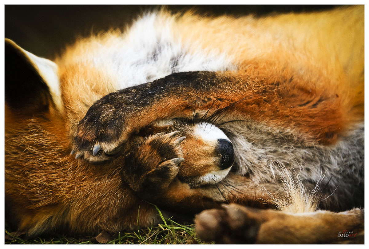 Fuchs I