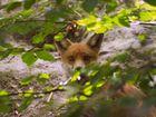 Fuchs im Unterholz