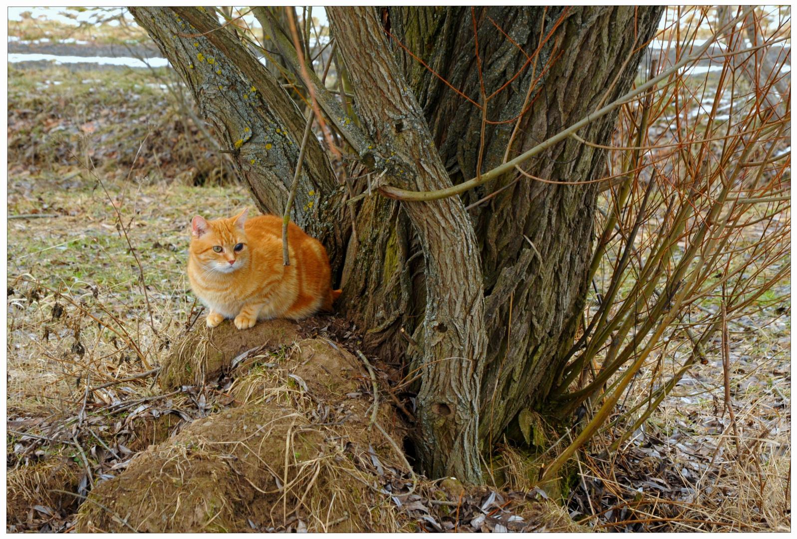 Fuchsie hat sich versteckt (Zorrito se ha escondido)