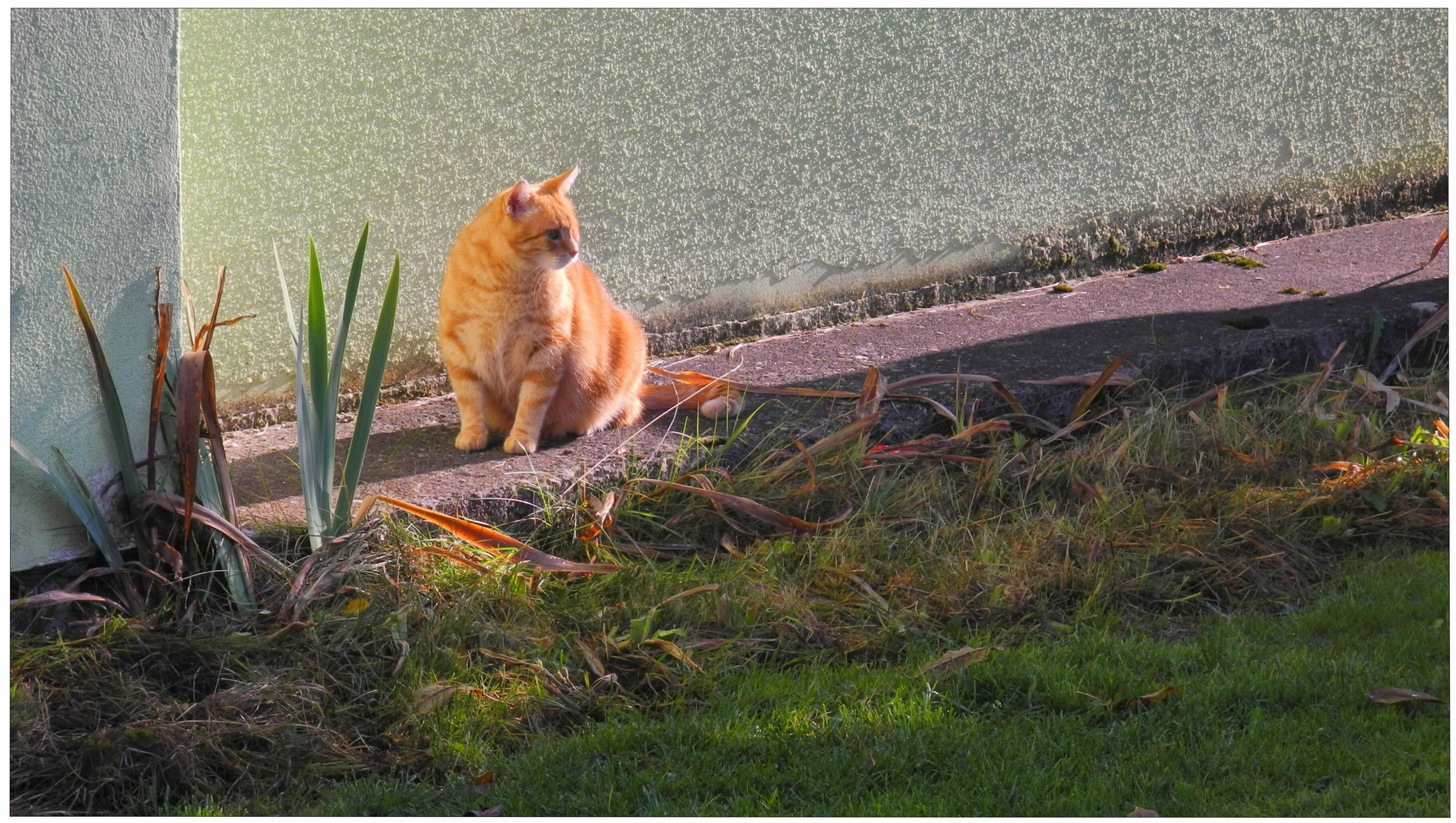 Fuchsie, mein Sonnenschein (Zorrito, mi cariño)