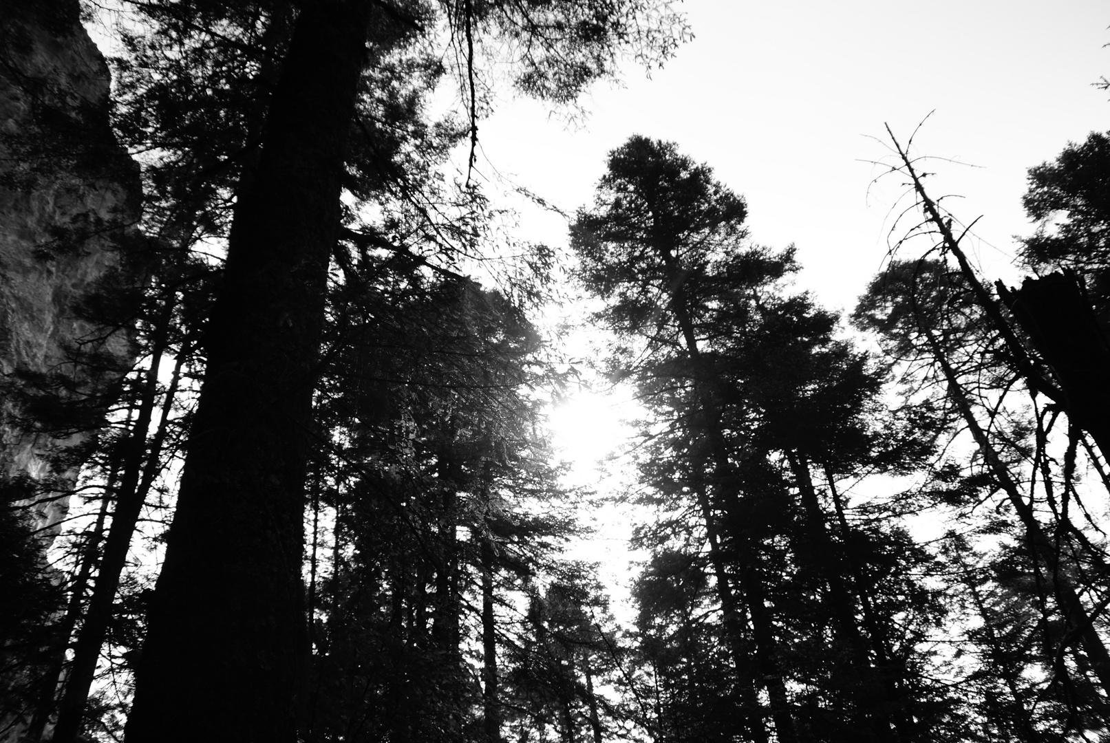 Fue un buen sabado para tomar fotos en el bosque