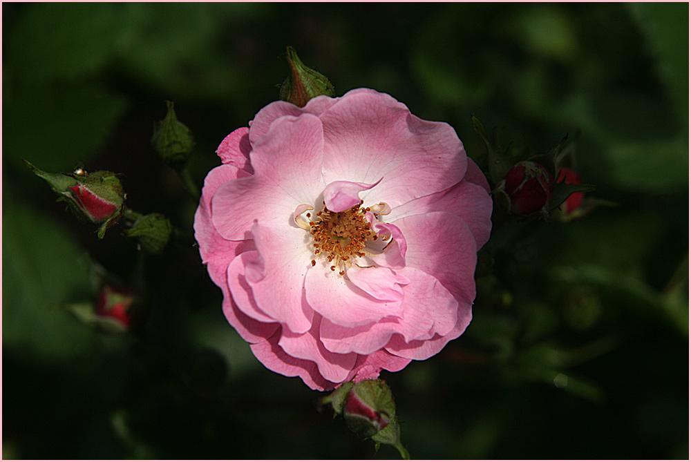 Für alle Blumenfreunde...