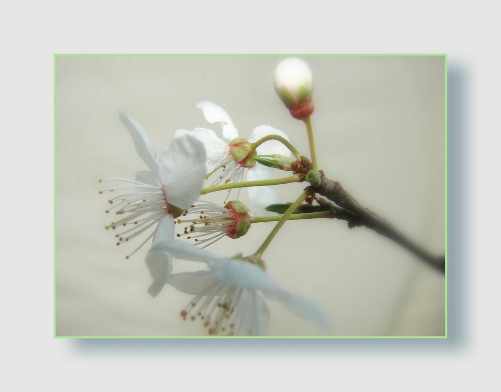 Für alle die den Frühling kaum erwarten können
