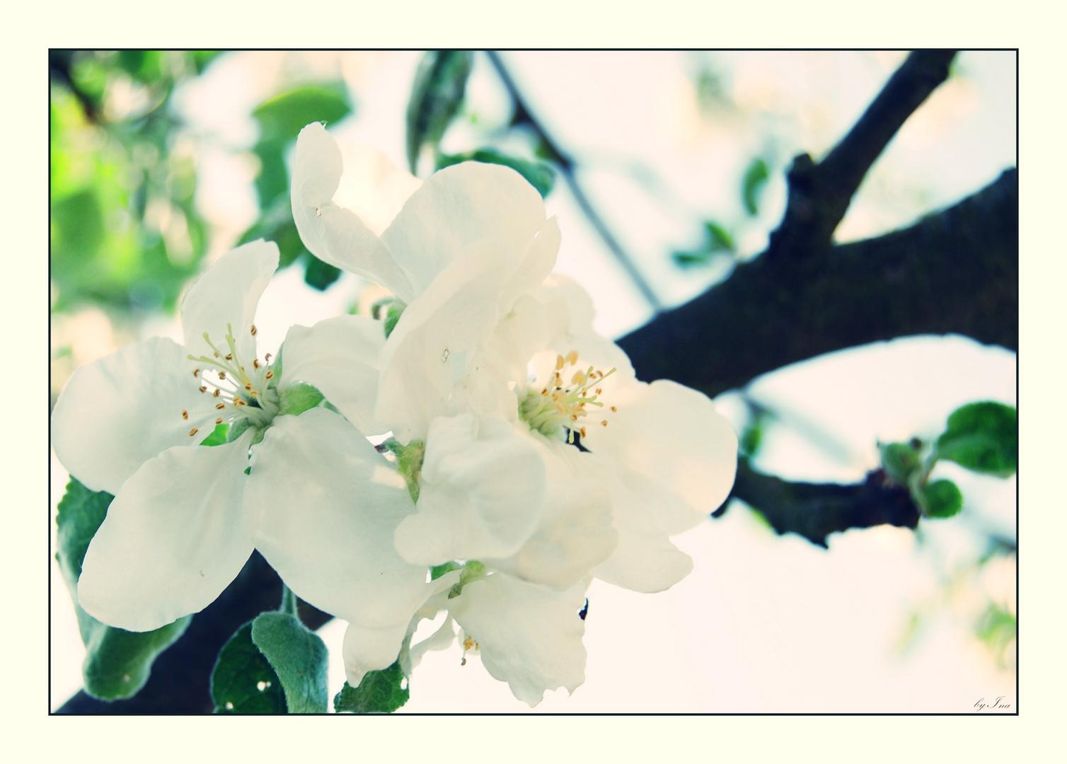 ...für alle die den Frühling lieben!