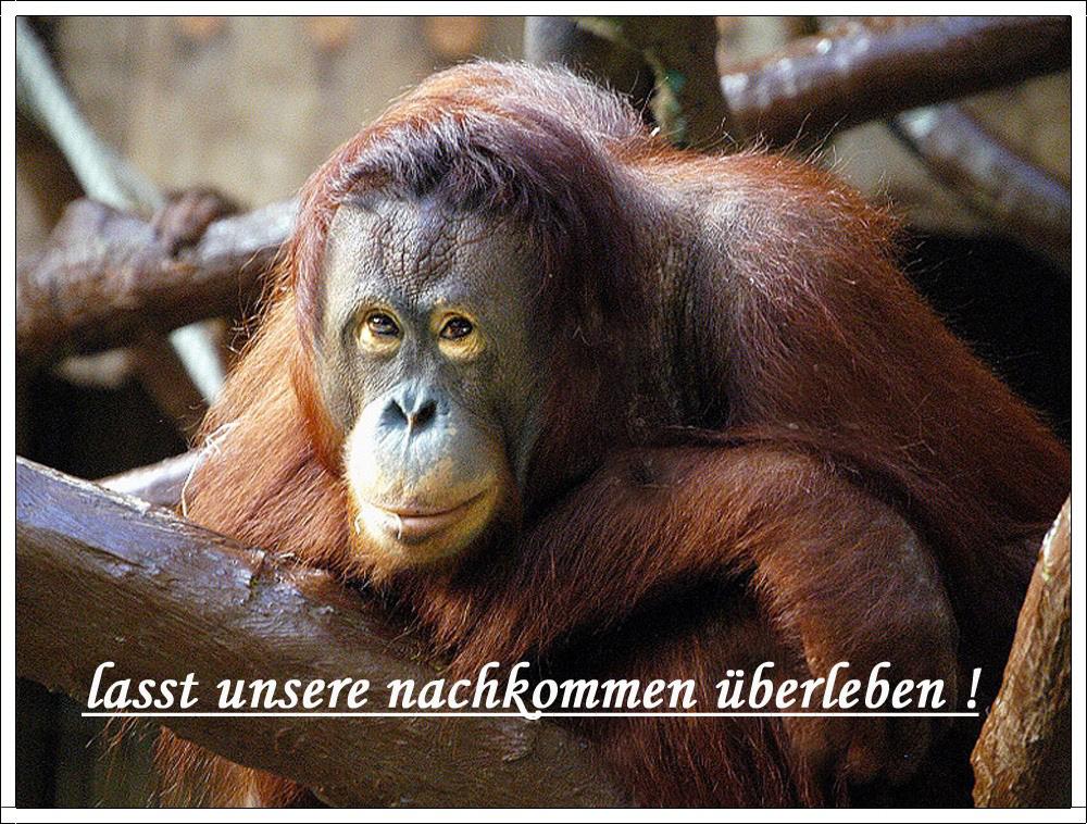 FÜR  ALLE , DIE  TIERE  LIEBEN ..PURES ENTSETZEN !!!!! siehe untertitel !!!