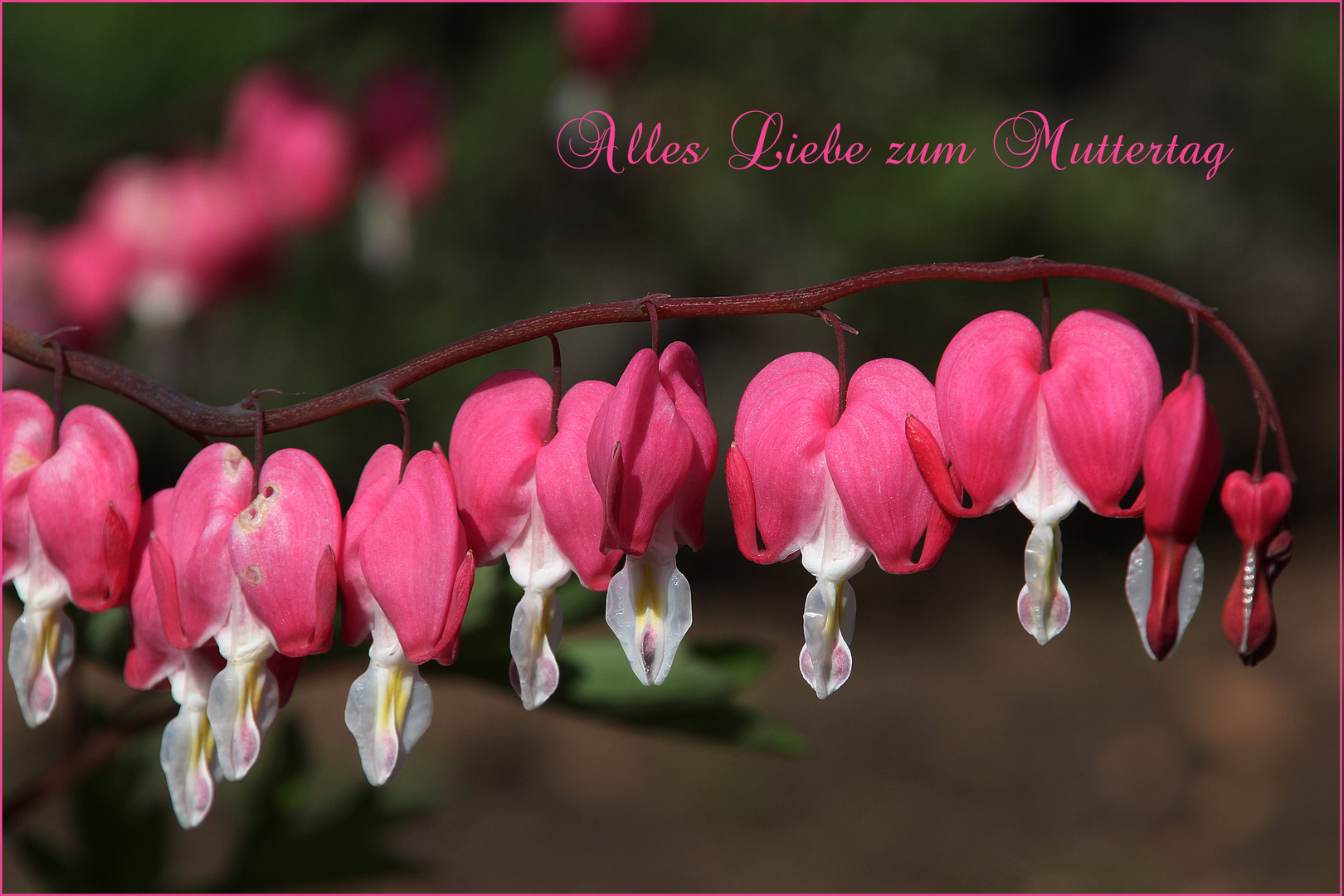 Für alle Mütter Foto & Bild | gratulation und feiertage, muttertag ...