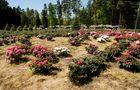 Für alle Rhododendron-Freunde (1)