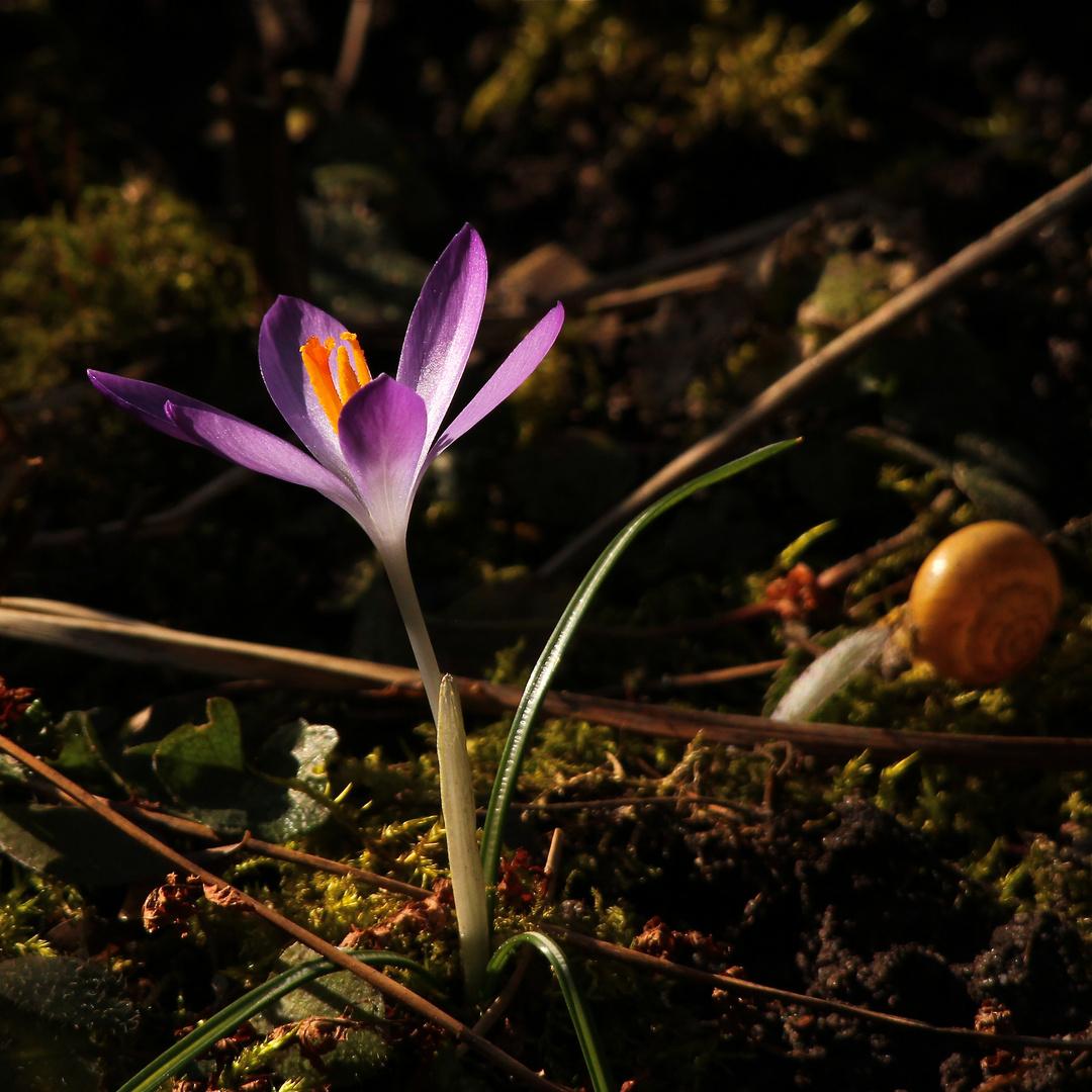 Für Andreas - damit ein bißchen Frühling auch schon in die noch verschneite Eifel kommt . . .