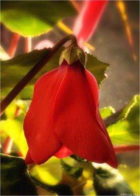 Für Blumenfreundinnen und Freunde...