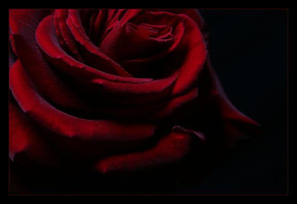 Für Dich soll es rote Rosen regnen....