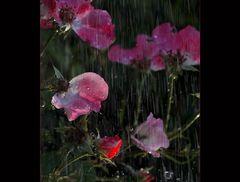 Für dich sollt´s rote Rosen regnen ....