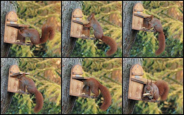 Für die Eichhörnchenfreunde