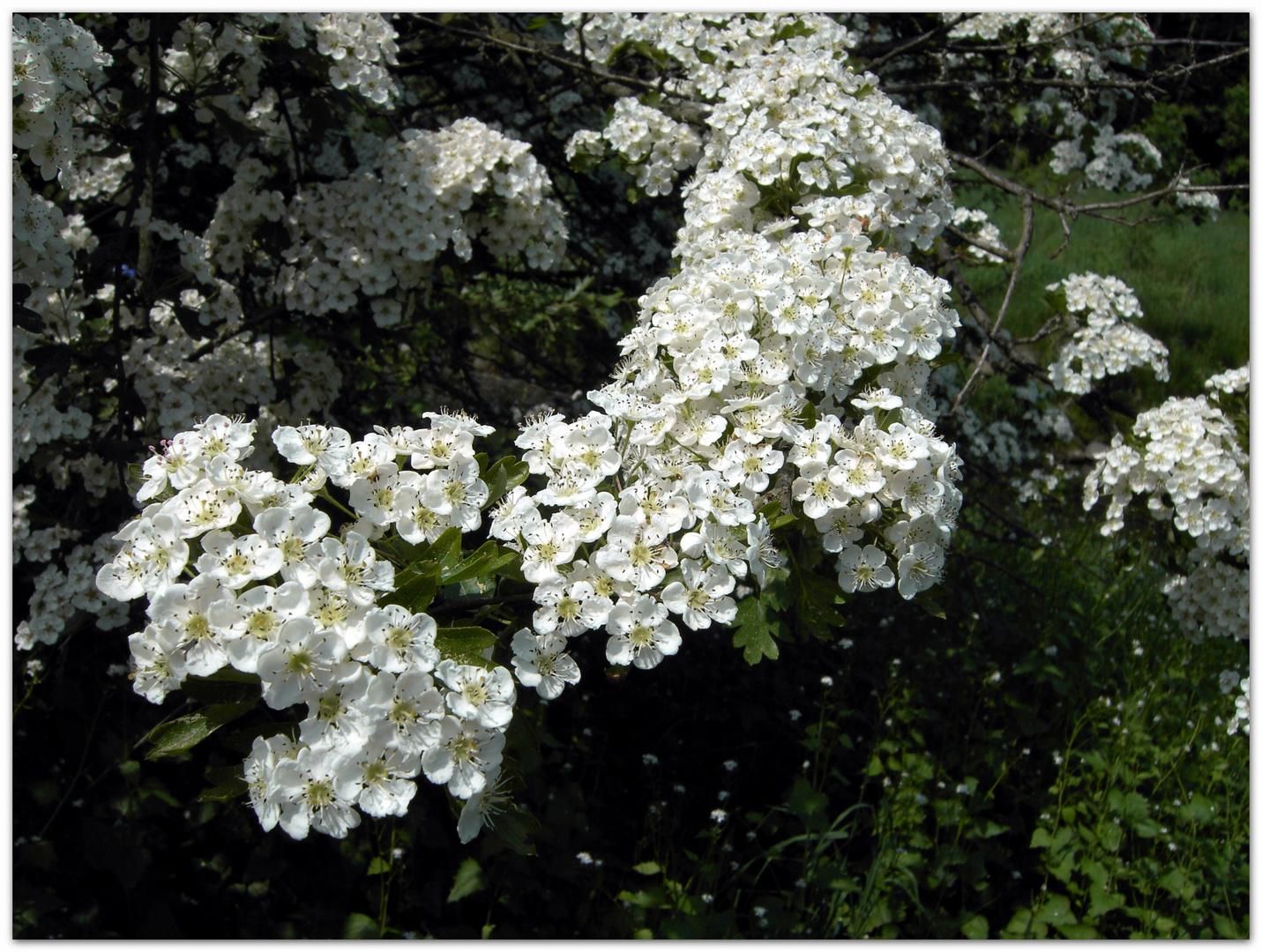 Für Euch.........einen wunderschönen Frühlingsanfang