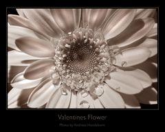 Für Hundini seine Valentines Flower...