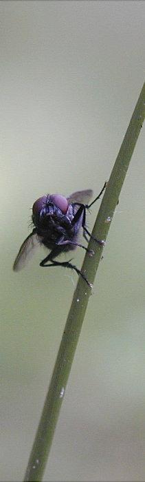 für Insektenbücher