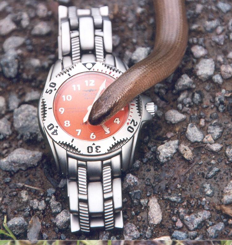 für manche Uhren muss man halt Schlange stehen...
