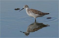 Für Ornithologen von Interesse...