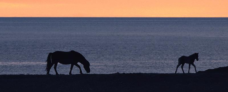Für Pferdefreunde