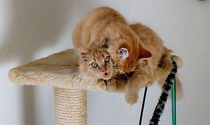 für Sabine         aus der Kittencollage von gestern (von 2004!)