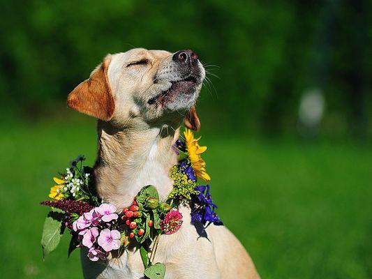 Für Schotti, eine Blumenfee...