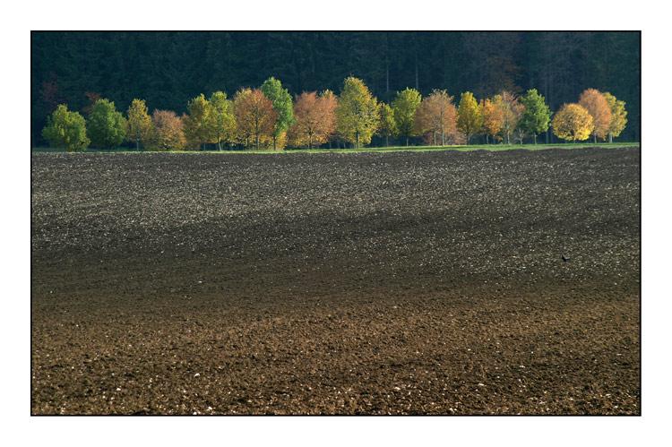 Für Sylvia - mein Herbstbild 04
